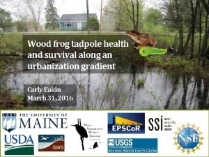 Wood frog tadpole health and survival along an