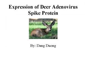 Expression of Deer Adenovirus Spike Protein By Dang