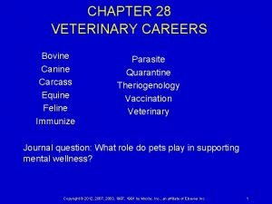 CHAPTER 28 VETERINARY CAREERS Bovine Canine Carcass Equine