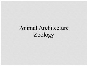 Animal Architecture Zoology WHAT IS AN ANIMAL An