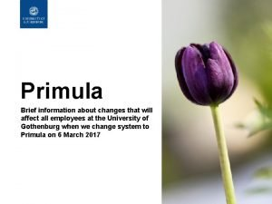 Primula Brief information about changes that will affect