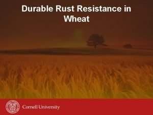 Durable Rust Resistance in Wheat Durable Rust Resistance