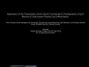 Repression of the Transcription Factor Bach 2 Contributes