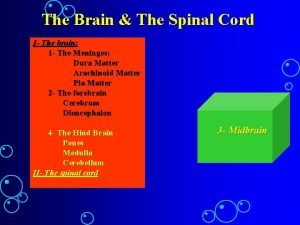 The Brain The Spinal Cord I The brain
