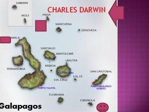 Galapagos CHARLES DARWIN Animal in Galapagos islands q