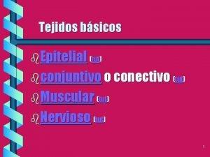 Tejidos bsicos b Epitelial tut bconjuntivo o conectivo