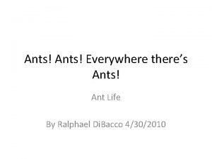 Ants Everywhere theres Ants Ant Life By Ralphael