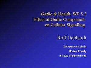 Garlic Health WP 5 2 Effect of Garlic