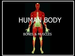HUMAN BODY BONES MUSCLES TOPICS n Bones n
