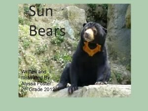 Sun Bears Sun Bear Written and Illustrated By
