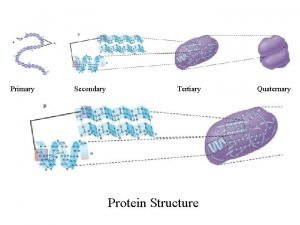 Primary Secondary Tertiary Protein Structure Quaternary Energy Outline