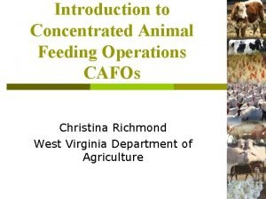Introduction to Concentrated Animal Feeding Operations CAFOs Christina
