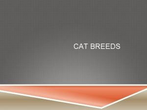 CAT BREEDS EYES Kittens open their eyes at