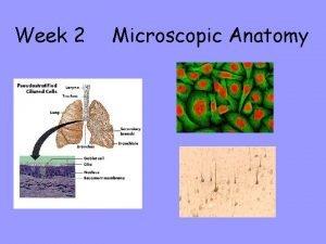 Week 2 Microscopic Anatomy Objective 1 The Compound