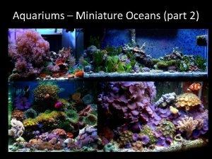Aquariums Miniature Oceans part 2 Photosynthesis Respiration and