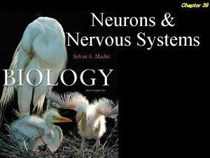 Chapter 39 Neurons Nervous Systems 2 Outline EVOLUTION