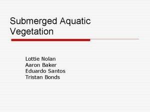 Submerged Aquatic Vegetation Lottie Nolan Aaron Baker Eduardo