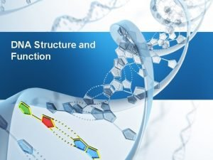 DNA Structure and Function DNA Structure and Function