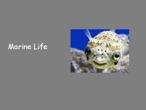 Marine Life Classification of living organisms Three domains