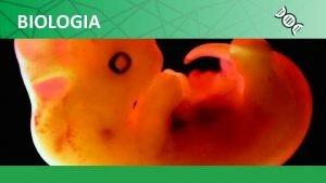 BIOLOGIA BIOLOGIA Csar da Silva Jnior Sezar Sasson