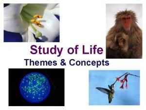 Study of Life Themes Concepts Umbrella Concepts Big