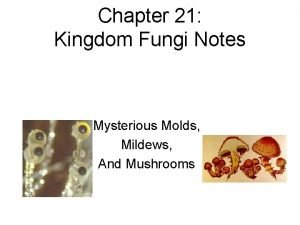 Chapter 21 Kingdom Fungi Notes Mysterious Molds Mildews
