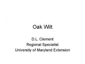 Oak Wilt D L Clement Regional Specialist University