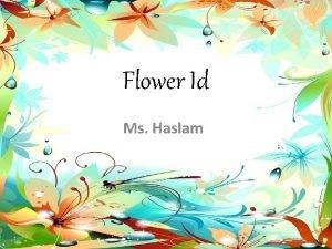 Flower Id Ms Haslam Flower ID 1 Bromeliad