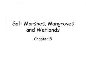 Salt Marshes Mangroves and Wetlands Chapter 5 Salt