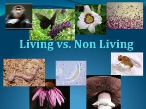 Living vs Non Living Characteristics of Living Things