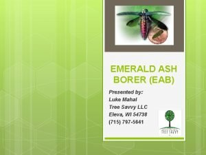 EMERALD ASH BORER EAB Presented by Luke Mahal