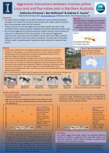 Aggressive interactions between invasive yellow crazy ants and