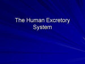 The Human Excretory System Excretory System The kidneys