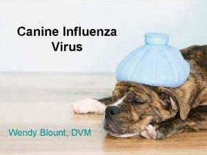 Canine Influenza Virus Wendy Blount DVM Kennel Cough