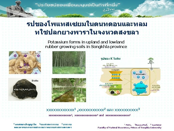 Potassium forms in upland lowland rubber growing soils