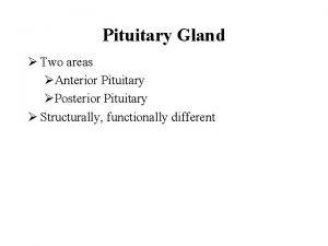 Pituitary Gland Two areas Anterior Pituitary Posterior Pituitary