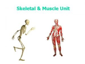 Skeletal Muscle Unit Notes How many bones does