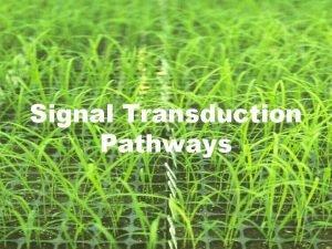 Signal Transduction Pathways Signal Transduction Pathways link cellular