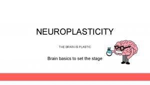 NEUROPLASTICITY THE BRAIN IS PLASTIC Brain basics to