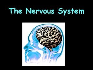 The Nervous System The Nervous System What is