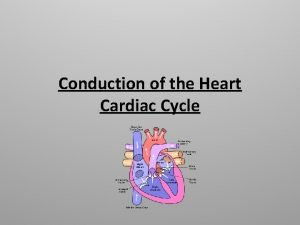 Conduction of the Heart Cardiac Cycle Learning Objectives