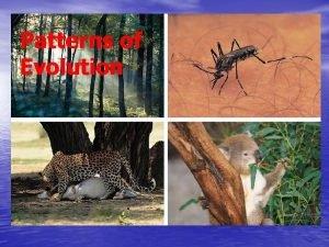 Patterns of Evolution Patterns of Evolution Sections 1