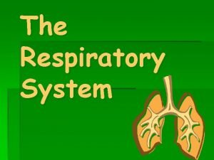 The Respiratory System Respiratory system moves oxygen into