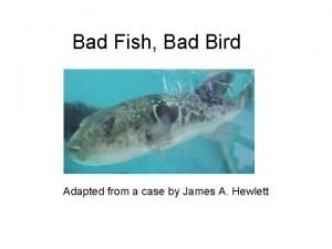 Bad Fish Bad Bird Adapted from a case