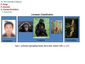 IV The Domain Eukarya E Fungi F Animals