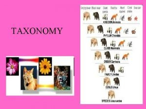 TAXONOMY Taxonomy is a branch of science that