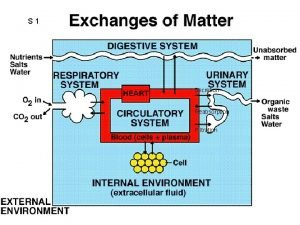 S 1 Secretion Reabsorption Filtration S 2 Circulatory