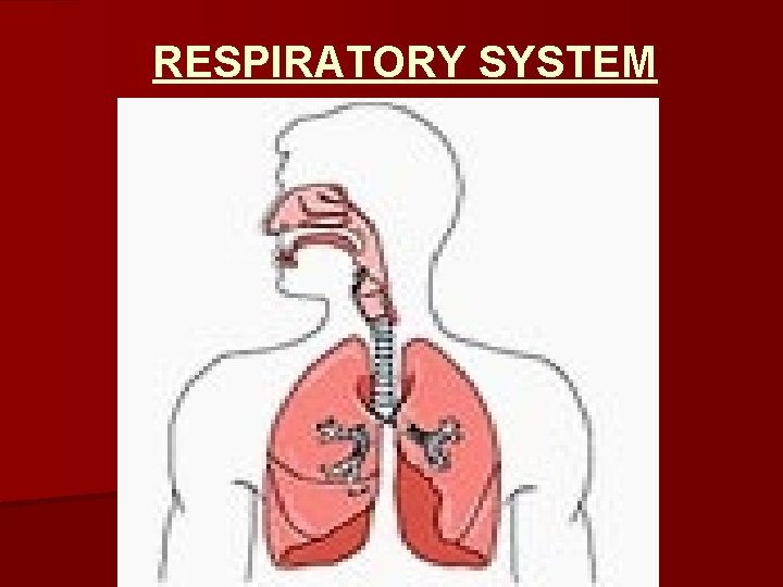 RESPIRATORY SYSTEM Breathing n Breathing in is called