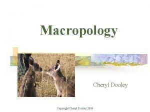 Macropology Cheryl Dooley Copyright Cheryl Dooley 2004 Course