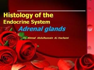 Histology of the Endocrine System Adrenal glands Dr